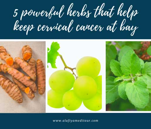 5 powerful herbs that help keep cervical cancer at bay