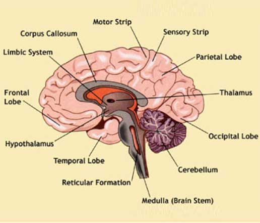 Types and symptoms of brain tumour